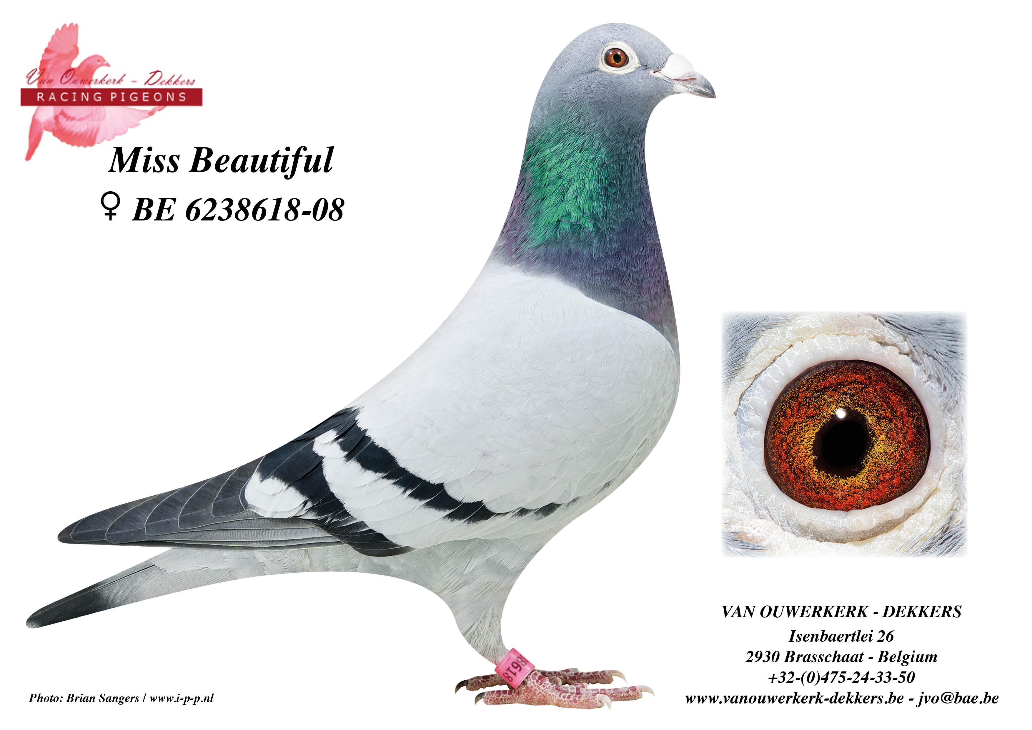 Van Ouwerkerk-Dekkers Racing Pigeons